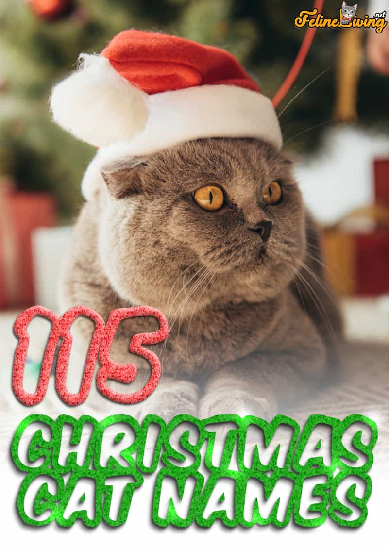 The Best 115 Christmas Cat Names For Your Bundle Of Joy